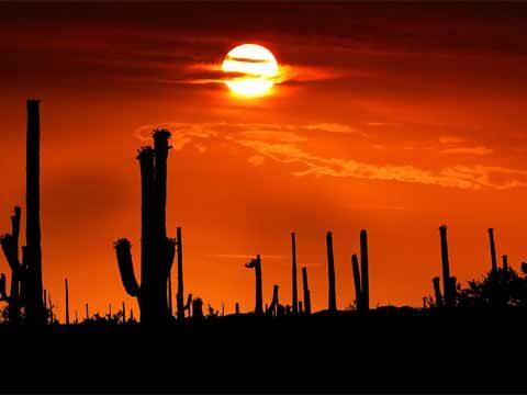 orange sunset with cactus silhouettes